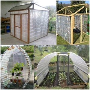 plastic-bottle-greenhouse