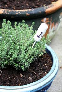 Thyme-Cork-Marker.-Quick-and-East-to-make-great-addition-to-any-herbs-683x1024